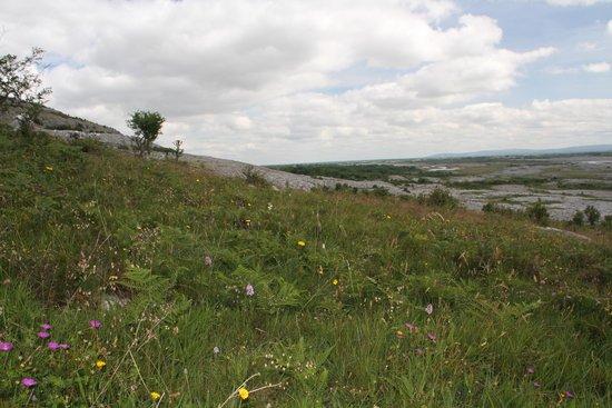 Heart of Burren Walks: The Burren
