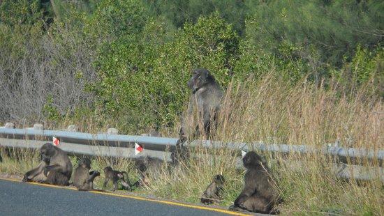 The Tradouwspass: Apen aan de zuidkant van de pass
