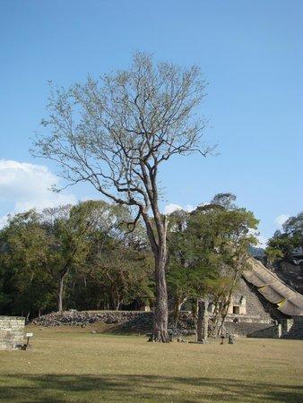 Les Ruines de Copan : Copán Ruínas