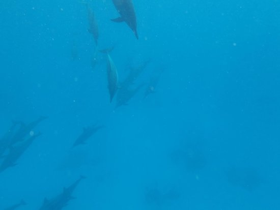 Brayka Bay Reef Resort: Nous avons vécu notre plus beau rêve : nager avec les dauphins ..