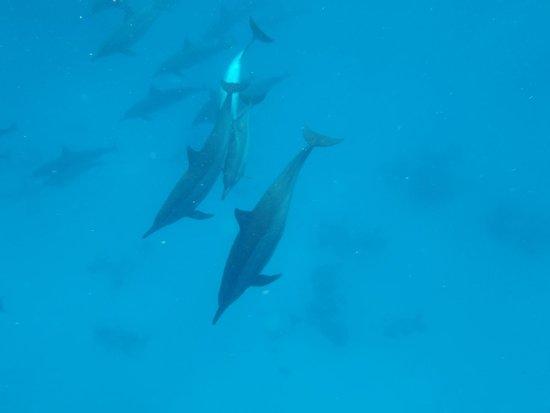 Brayka Bay Reef Resort: Les dauphins , c'est magique ...