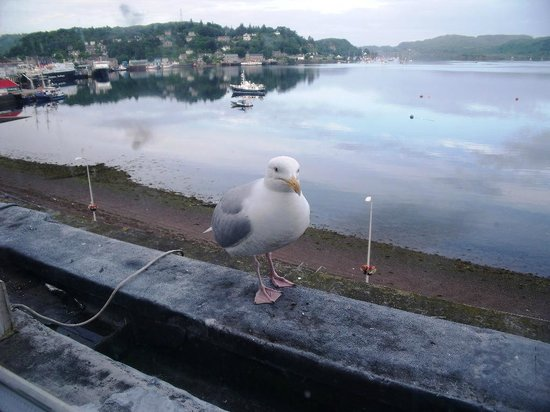 Bay Great Western Hotel: our morning visitor