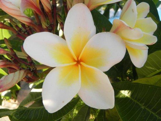 Atlantica Imperial Resort & Spa: Flowers