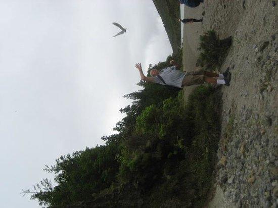 Lagoa do Fogo: defendiendo el nido