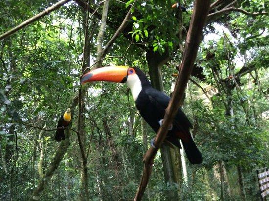 Belmond Hotel das Cataratas : El bello parque de los pájaros. En las afueras del parque donde se encuentra el hotel.