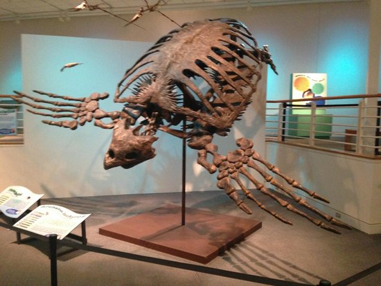 Newport News, VA: skeleton, archelon ischyros (giant sea turtle)