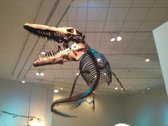 Newport News, VA: skeleton, sTylosaurus