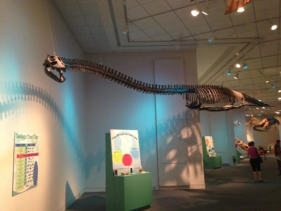 Newport News, VA: skeleton, Elasmosaurus