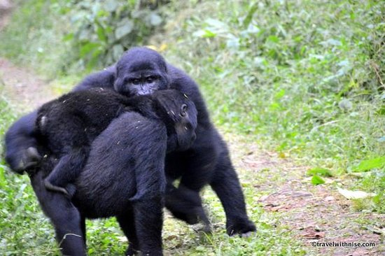 Bwindi Impenetrable National Park : Mother Kissing Baby