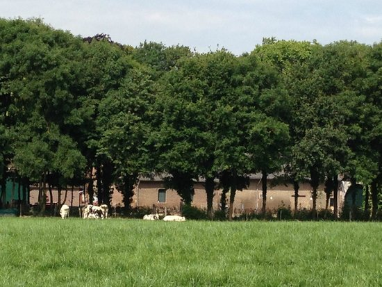 Hampshire Hotel - Kasteel Doenrade: pastoral setting with cows and fields