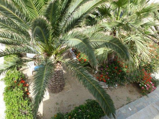 Coralli Beach Apartments: Vue sur le jardin