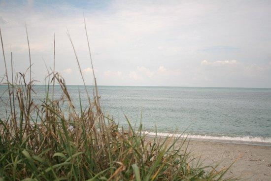 Turtle Beach: Beach