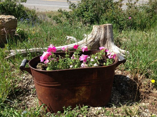 Marina View Condos: Flowers abuntant