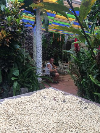 Caskaffesu: Best cup of coffee we've had in Ecuador!!! Tranquil garden in the back. Check out the local coff