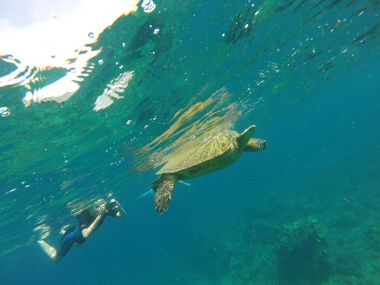 Four Seasons: Swimming with a Seaturtle