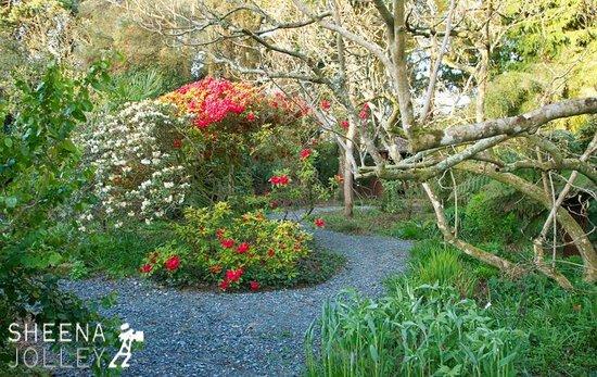 Kilmokea Gardens : Woodland garden spring 2013
