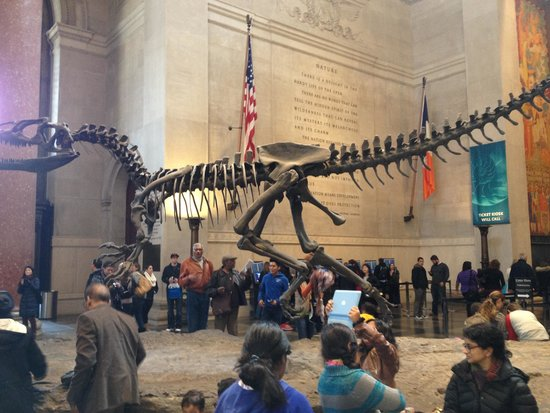 American Museum of Natural History : Hall de entrada do museu