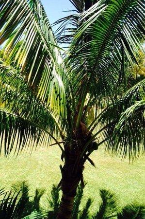 Beachcomber Paradis Hotel & Golf Club: Palme