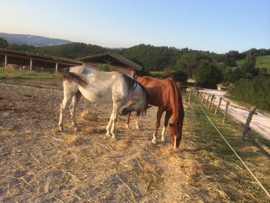 Agriturismo Ca' Maddalena : Horses on the Agriturismo... our kids (almost 3 and 5 did a nice walk on them)