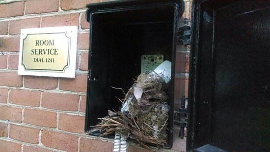 Fort Magruder Hotel: The best!!! Bird nest in room service phone box at the pool!!!!