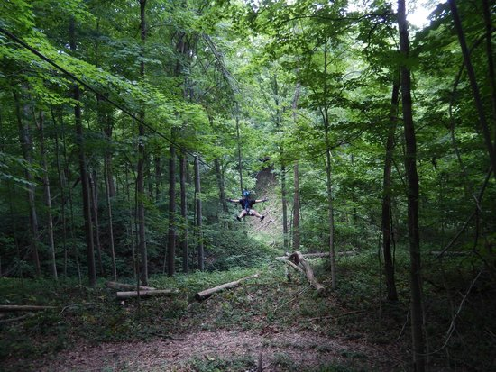 Beautiful forest - Picture of Indiana Zipline Tours, Inc