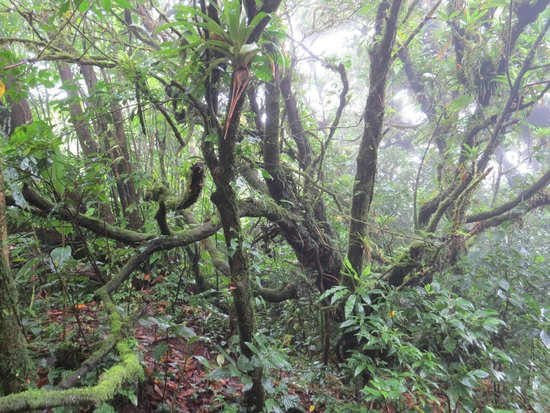 Tierra Day Tours:  Granada: Deep in the Cloud Forest