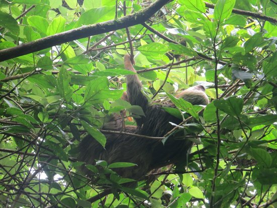Tierra Day Tours:  Granada: Sloths in the cloud forest