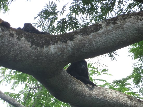Tierra Day Tours:  Granada: Howler Monkeys on the canopy tour