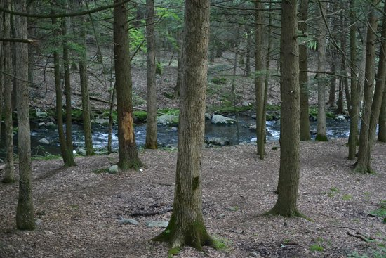 Stokes State Forest: The creek running through the Steam Mill camping area