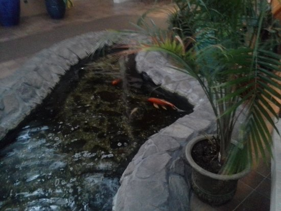 Quality Inn Oceanfront: Fish Pond