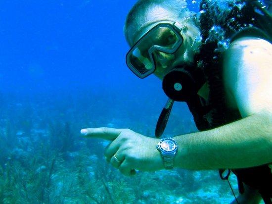 Conch Republic Divers: Diving Conch Key