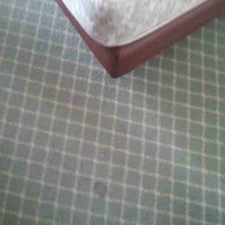 Best Western Hotel Plaza: worn out carpets