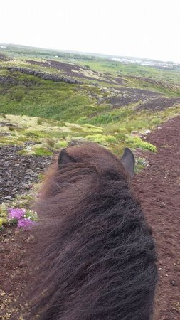 Islenski Hesturinn, The Icelandic Horse - Riding Tours: Lava fields on Völsungur :)