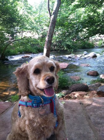 L'Auberge de Sedona: Bree enjoying a walk by Oak Creek