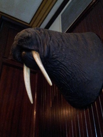 Old Ebbitt Grill: Sit under the Walrus for good luck  :)