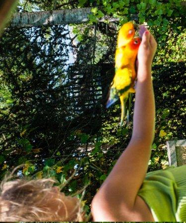"""Marineland: """"Шоу попугаев"""" . Разные птицы"""