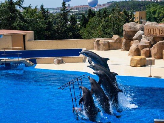 Marineland: Шоу с дельфинами