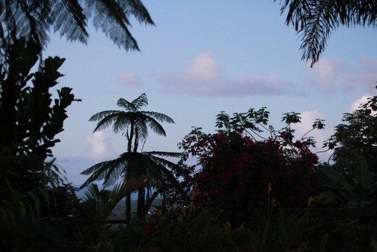Rainforest Inn view