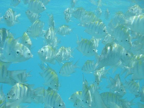 Iberostar Quetzal Playacar: Snorkeling at man-made reef to the south of Playacar (walking distance)