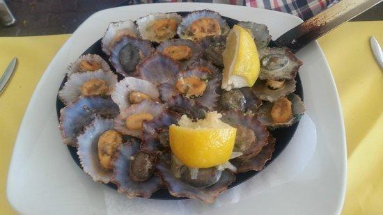 Real Canoa : Local shells