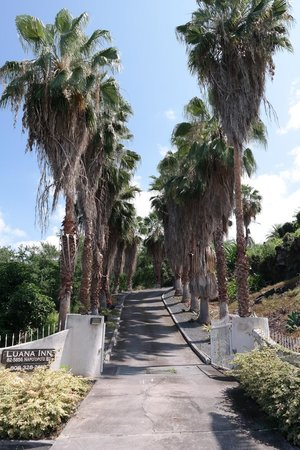 Luana Inn: The Road to Paradise (Looking up the Driveway)