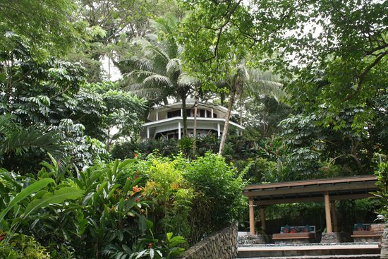 Koro Sun Resort and Rainforest Spa : Resort bure grounds