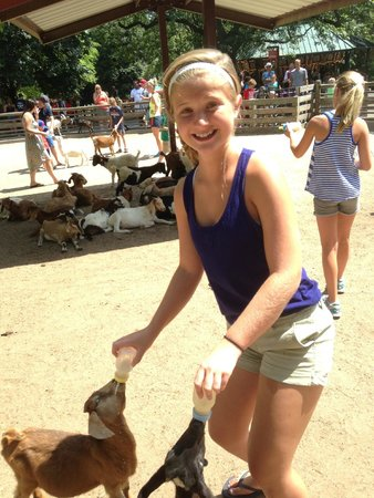 Grant's Farm: Feeding the goats