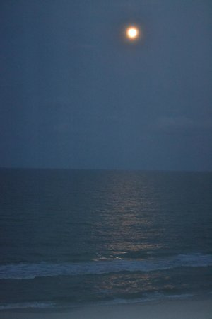 Osprey on the Gulf: Gulf in the Moonlight