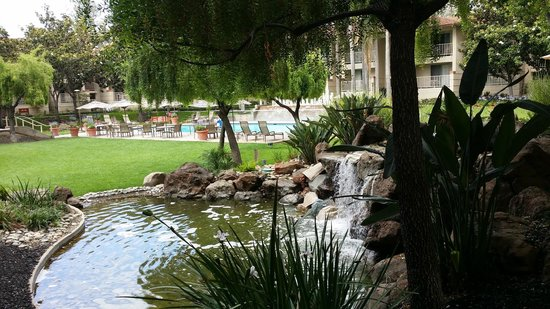 Sheraton San Jose Hotel: pool and pond area