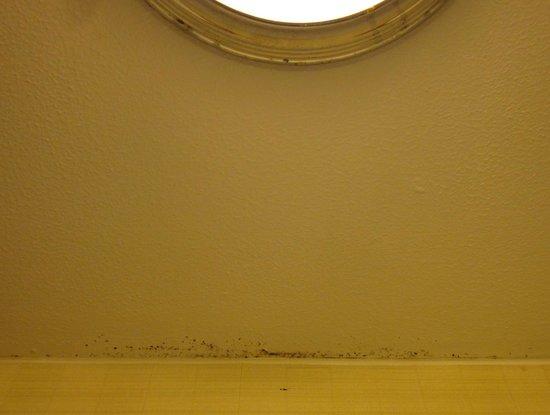 Executive Hotel Vintage Court: Bathroom mold