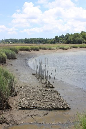 Oatland Island Wildlife Center: Oysters on bank of river