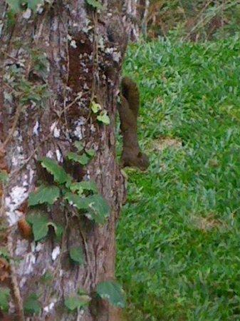 Grande Hotel Campos do Jordao: Esquilo em volta do hotel.