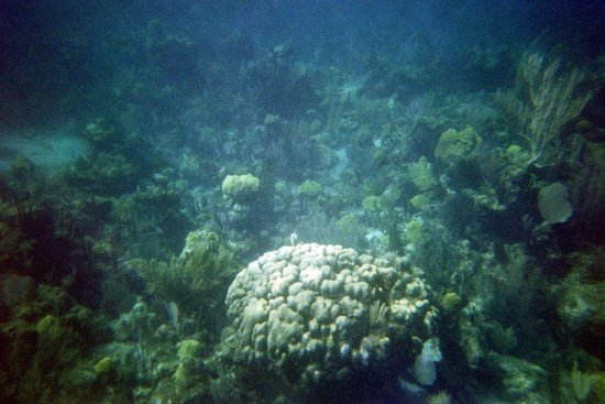 Brendal's Dive Center: Reef off GTC