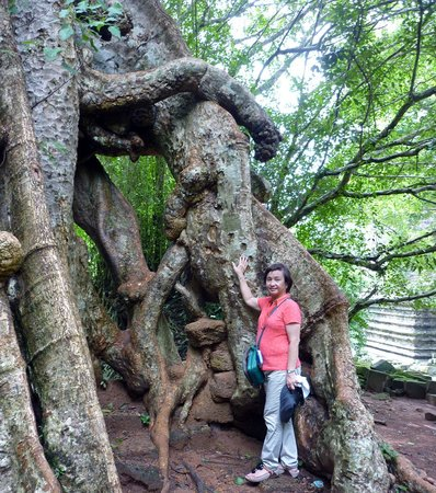 Ta Prohm: The Roots of the Century Old Trees